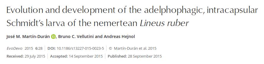 Evolução e desenvolvimento da larva adelfofágica e intracapsular do nemertíneo Lineus ruber